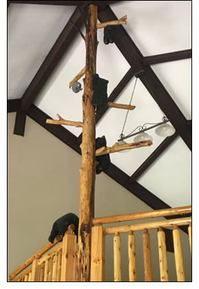 Global Connections Opens The Tree House At White Oak Lodge